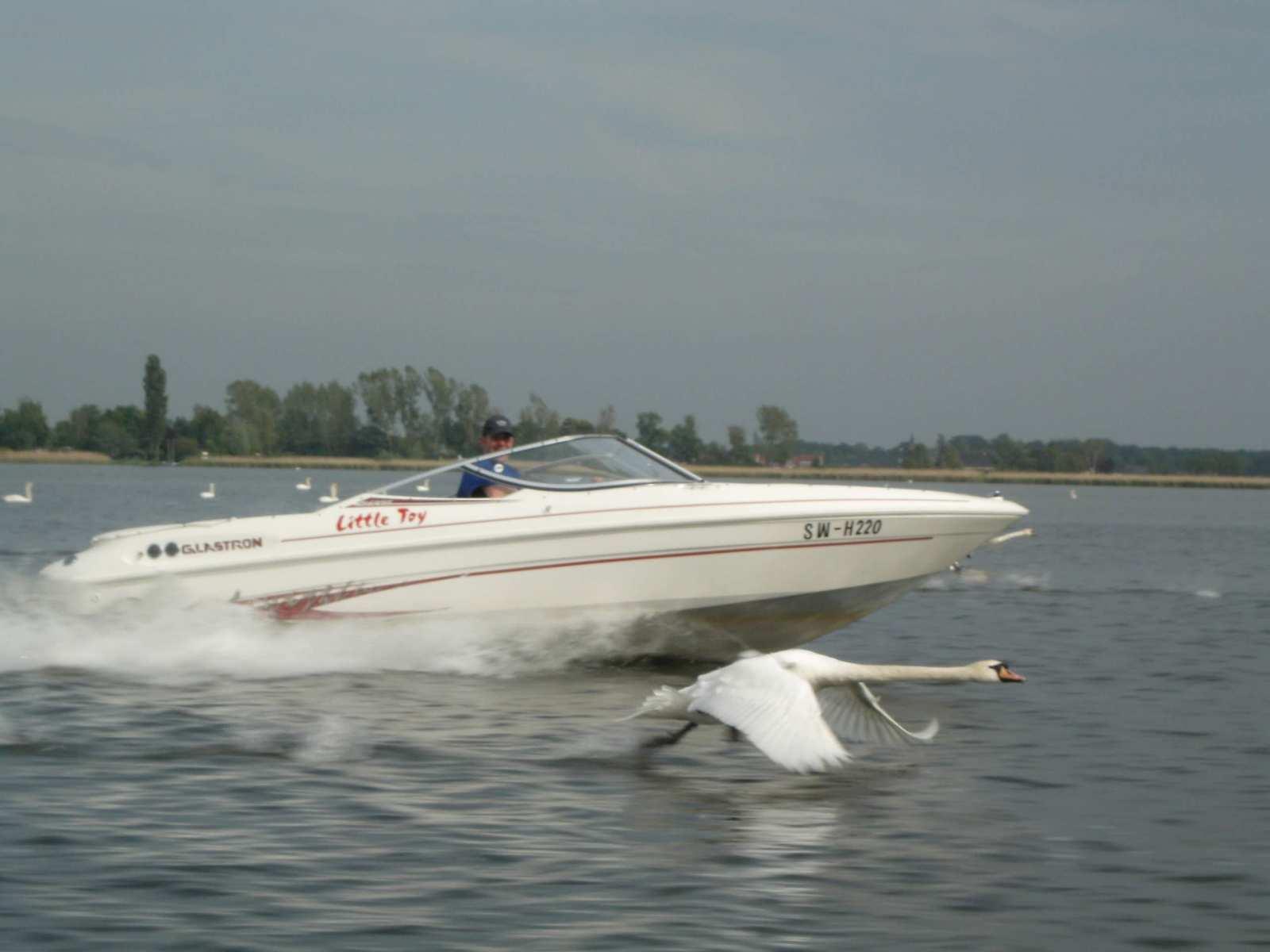 DLRG-2005-302